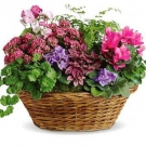 7 Plants at the Basket
