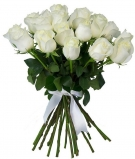White roses  Medium size, 24-27 inch