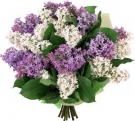The Lilak Bouquet  Lilac-White color