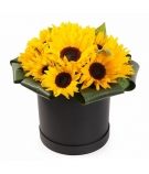 Sunflowers at the Hat Box