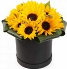 11 Sunflowers at the Hat Box