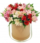 25 Alstroemeria Mix