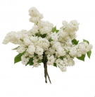 White Lilac Bouquet - unavailable in 2018