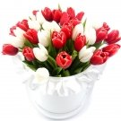 Red and White Tulips at the Hat Box