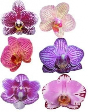 Unusual Orchids