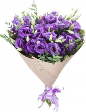 Eustoma - The Violet Luxury