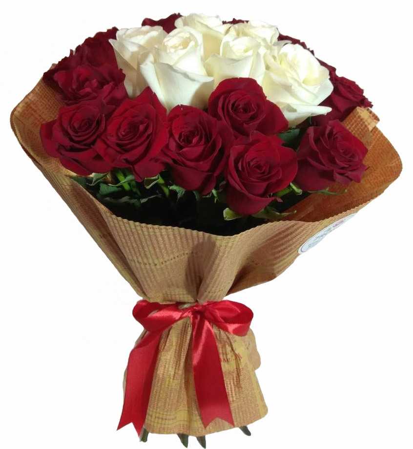 Red and White Roses image 0